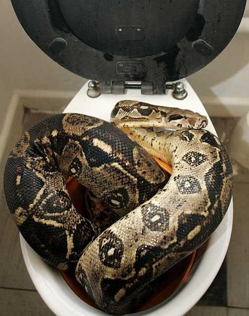 big_python_bangkok