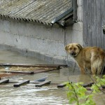 thai_floods-10