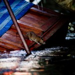 thai_floods-35