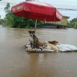 thai_floods-72